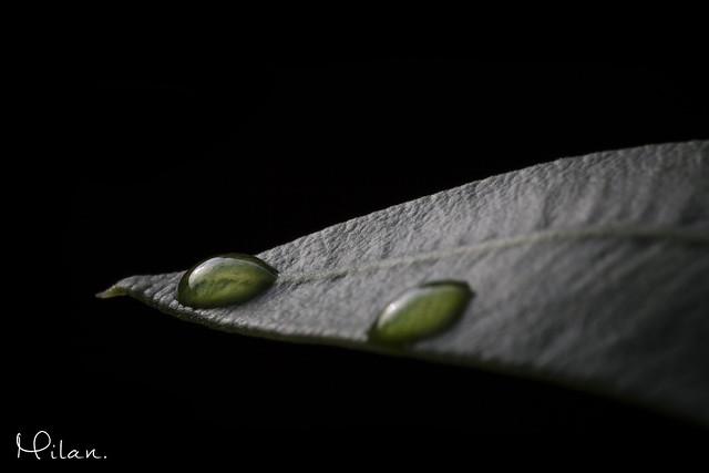 Leaf The Drops