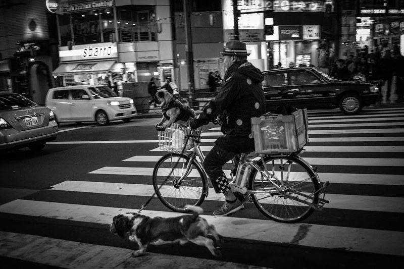 A man moving down the streets of Shibuya with his two dogs.