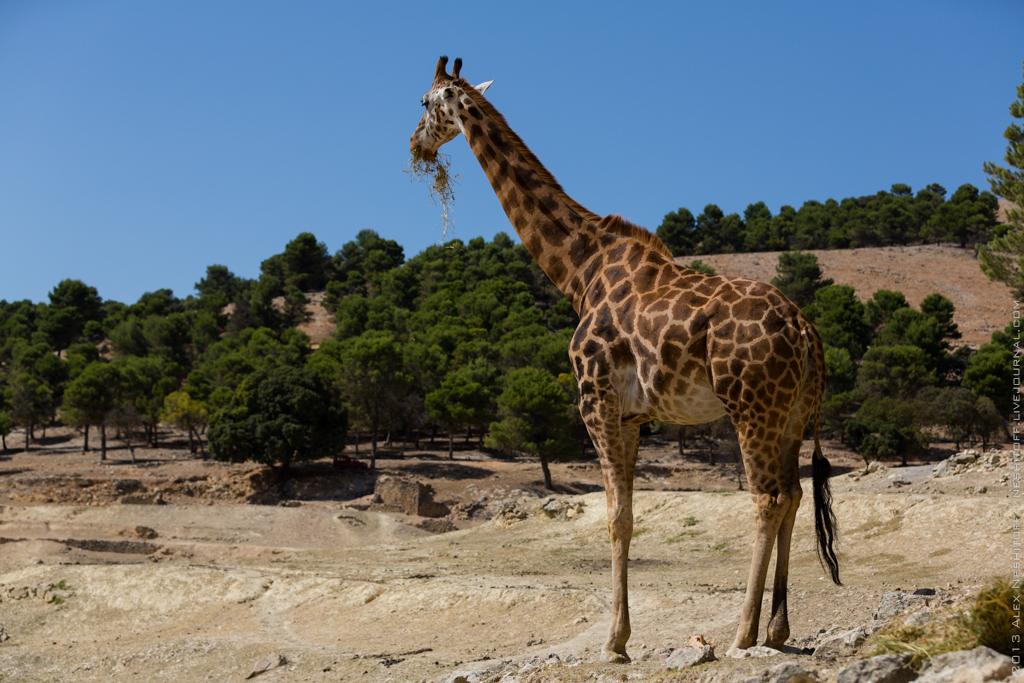 2013-Spain-Benidorm-SafariAitana-029