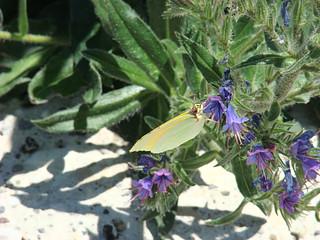 032 vlinder met geel-oranje vleugels