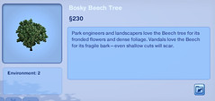 Bosky Beech Tree