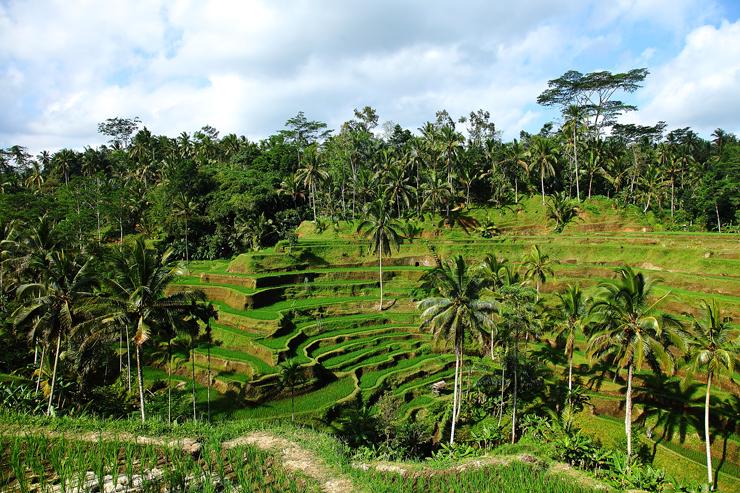 Tegalagang-Paddy-Field