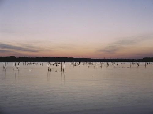 遠征 [印旛沼/佐倉ふるさと広場] : RICOHSIX 6x4.5