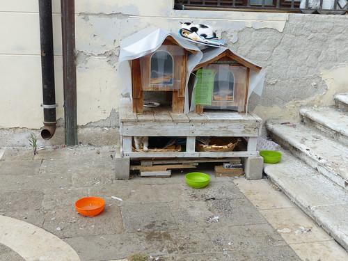 San Lorenzo CatShelter