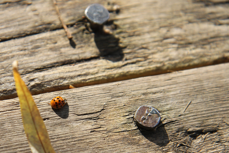 lady bug on the boardwalk3