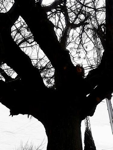 Él árbol de mis sueños triste esta by Jade.Bueno