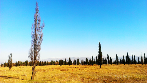 blue sky tree nature beautiful yellow mobile forest landscape photo amazing phone natural cell land cypress montenegro