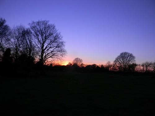 Trees at dusk 1