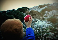 kid with deer