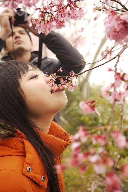 恩愛農場櫻花