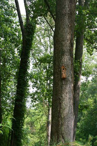 13_tall_trees
