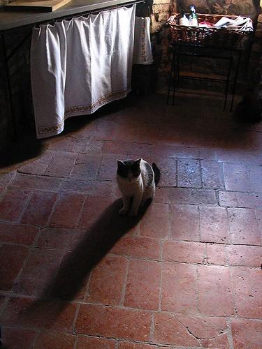 shadow cat floor ombra gatto pavimento canonpowershotg2 berisha