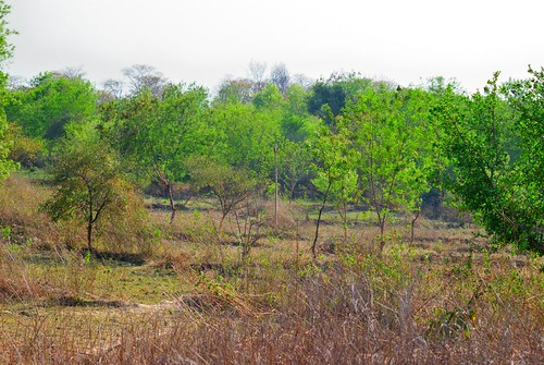 Chaibasa Forest