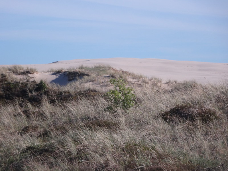 Big dune south of Skagen
