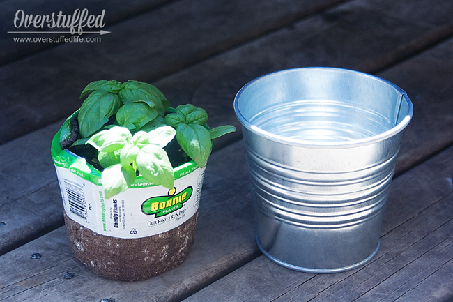 I used IKEA Socker buckets to pot the herbs for my patio herb garden.