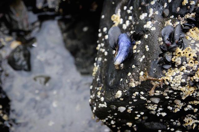 alaskan seashore.......