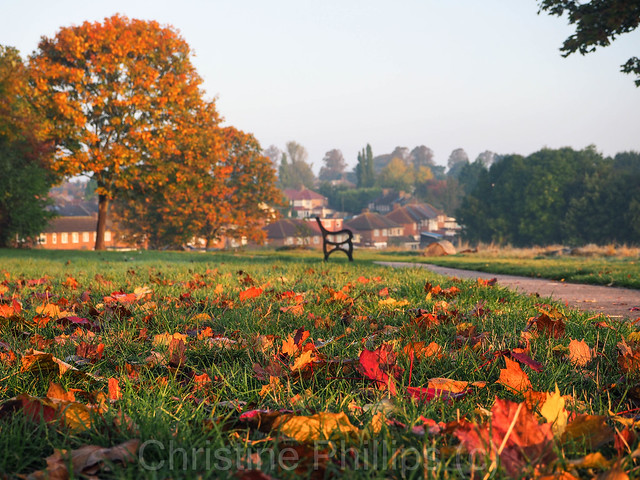 A walk in the park on an Autumn morning