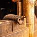 Trunk, David Sheldrick Wildlife Trust, Nairobi, Kenya by Poulomee Basu