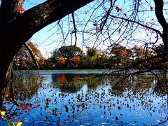 Mill Pond Park -- Autumn (59)