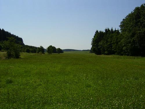 Green Grass in July