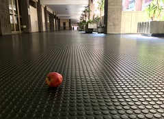 #rome #nature against #concrete , #emotions against #work :stuck_out_tongue_winking_eye:
