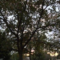 The way my day ended. 1 December 2016 #sunset #samespotforayear #vso #vsocam #nofilter