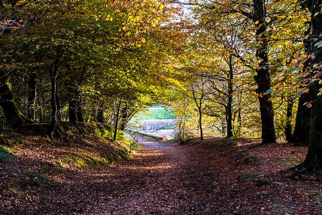 Woodland Track in November, Nikon D610, AF-S Nikkor 28-300mm f/3.5-5.6G ED VR