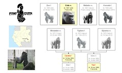 Gorillas: Franceville Research Center (Ver. 2)