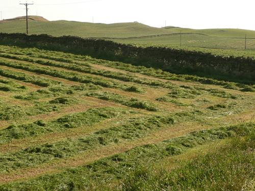 meadow patterns