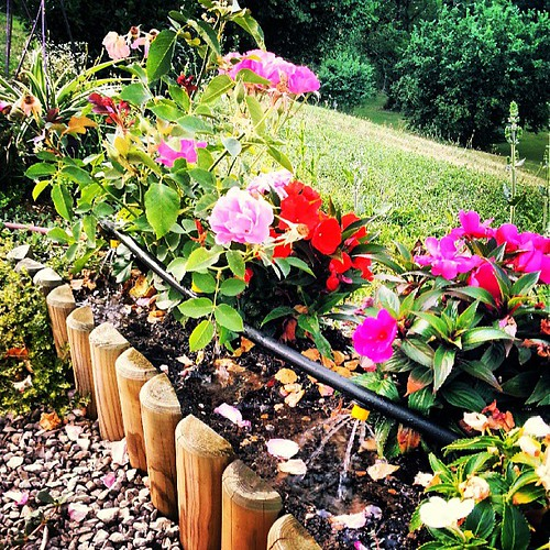 #nature #instamoment #tagsforlike #sun #soleil#fleur #flower#couleur #color #love#rose #pink #violet #purple