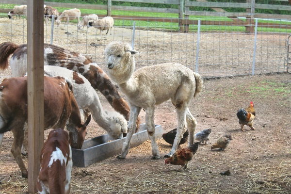 Petting Zoo, 6