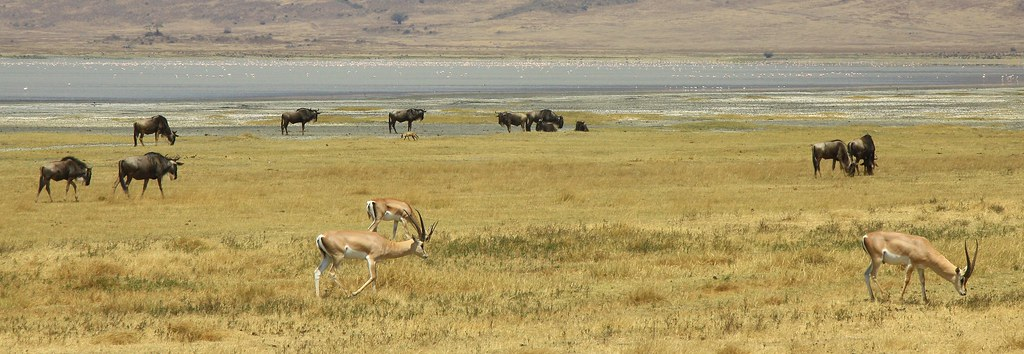 Impala n White-bearded Wildebeest n Jackal