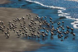 Costa Rica - North Puntarenas - Playa Naranjo - Pacific Ocean