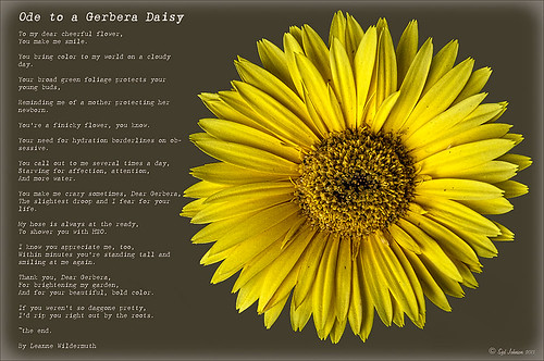 Image of a yellow gerbera daisy with a poem