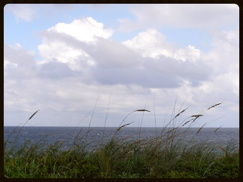 ocean autumn sea beach clouds coast mar florida dunes windy shore grasses seedheads 2013 mystuart