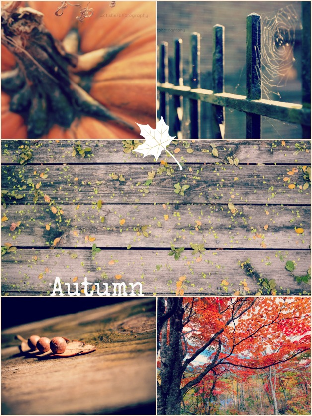 Collage-autumn on DesignYourOwnBlog.com