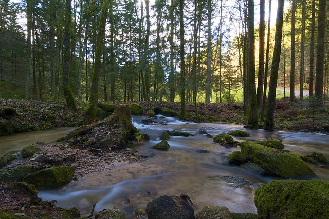 beautiful creek in the Black Forest