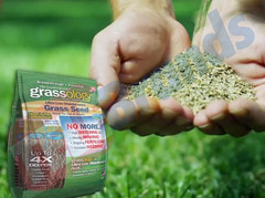 Best grass seed for any lawn