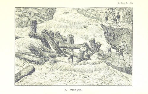 Image taken from:  Title: Kangaroo and Kauri. Ske...