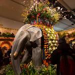 Elephant flowers at Macy's