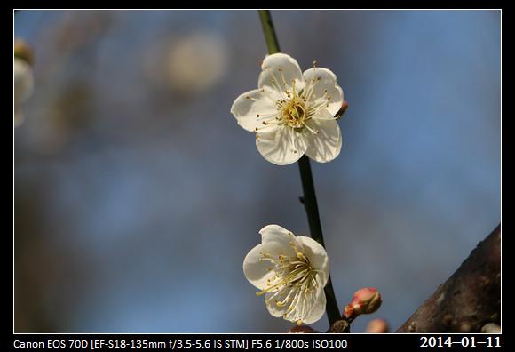 20140111_Flower6