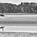 Baie de Somme - Gym ©chanutdominique