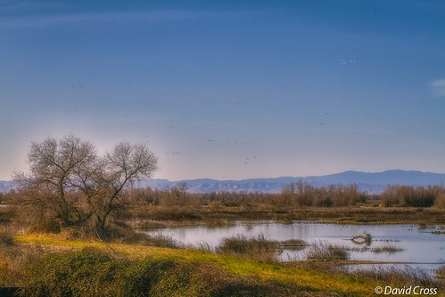 california winter birds northerncalifornia reflections landscape marsh waterfowl baretrees marshland sacramentovalley buttecounty canon70200mm28l californiacentralvalley canon7d lightroom5 topazsw graylodgepreserve