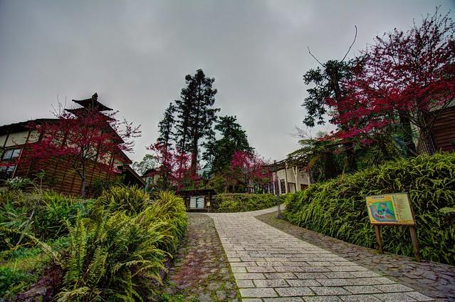 內湖國小山櫻花風景 HDR 8 合成