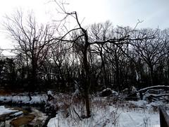 Brookside preserve
