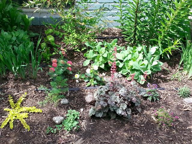 sally-garden2