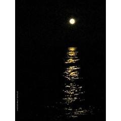 Superluna su #senigallia #igersmarche #ig_marche #igersitalia #ig_italia #supermoon #moon #moonset #moon_sunset #moonlovers #igers #sky #skyporn #rsa_sky #sea_sky_nature #sky_painters #sea   #night #nightsky #nightout #dark #darkness #ig_captures #sunrise