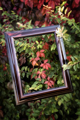 """Week 40 of 52 Theme: """"Frame within a Frame"""" Fall Famed"""