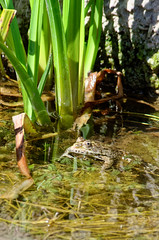 Frog - Photo of Cussey-les-Forges