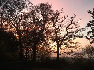 Dusk in Ashtead Forest
